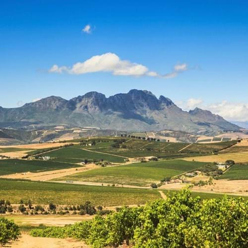 Cape Town, the Garden Route & Winelands - Solo Traveller